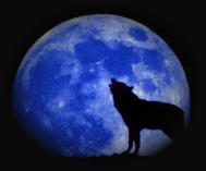A Wolf Howls at the Blue Killing Moon To Clear Negative Karmic Bonds